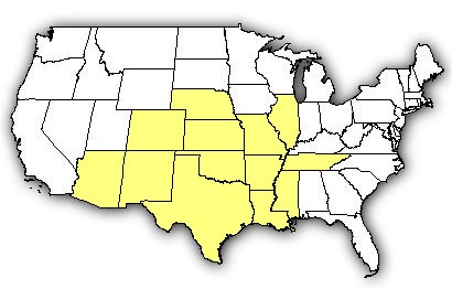 Map of US states the Stripebacked Scorpion is found in.