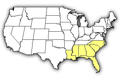 Map of US states the Eastern Coral Snake is found in.