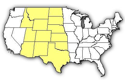 Rattlesnakes In Colorado Map.Venombyte Com Venomous Snakes Prairie Rattlesnake