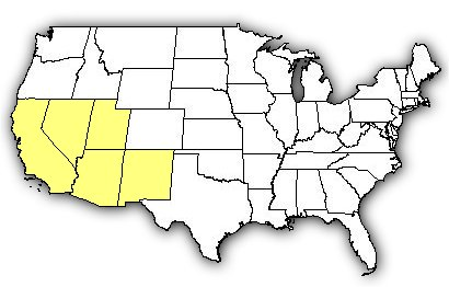 Map Of Us States The Desert Recluse Is Found In